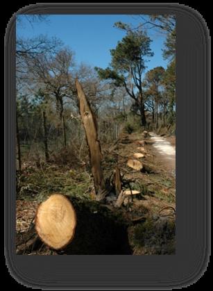 image085-dégats tempête Klaus réserve ornitologique le Teich 2009