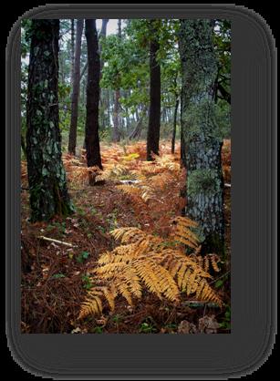 image086-fougère forêt