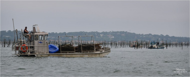 blog-dsc_35776-parcs-à-huîtres.jpg