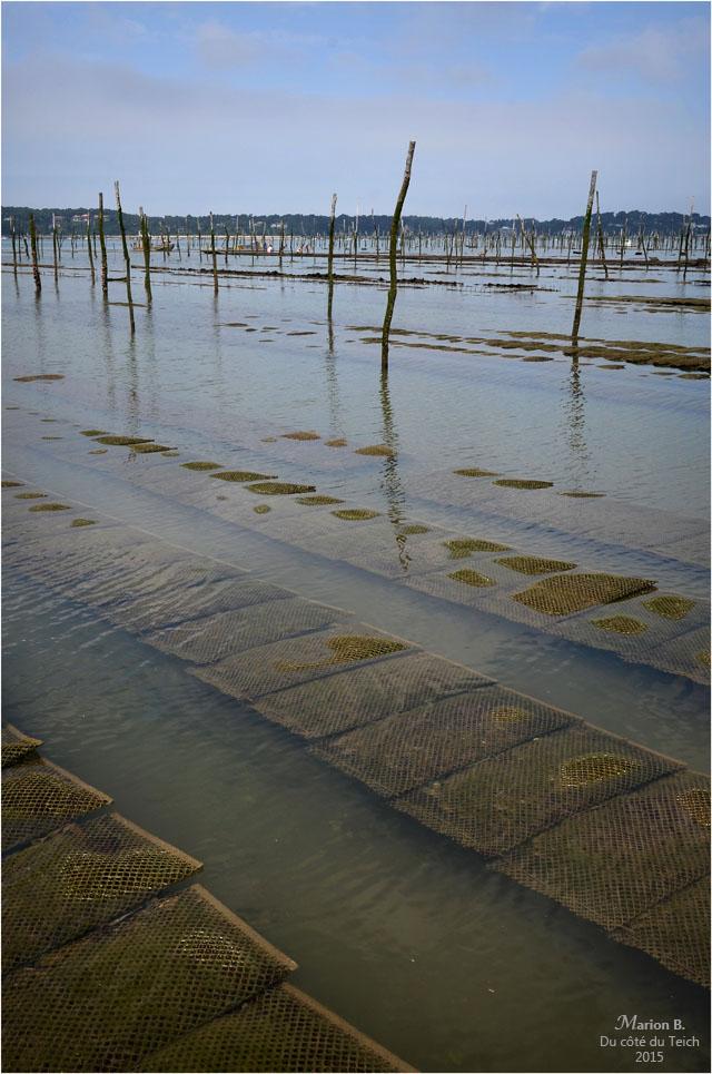 blog-dsc_35800-parcs-à-huîtres-marée-descendante.jpg