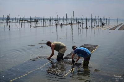 blog-dsc_35811-travail-parcs-à-huîtres.jpg