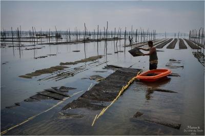 blog-dsc_35816-travail-parcs-à-huîtres.jpg