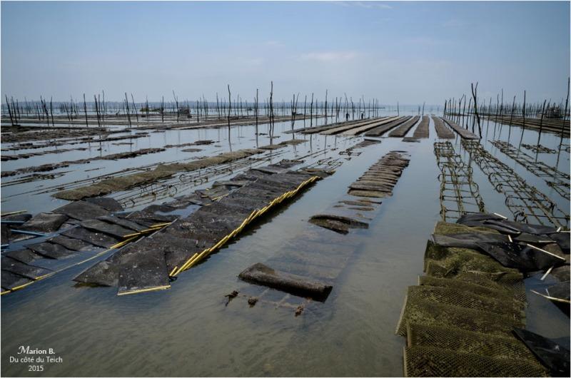 blog-dsc_35820-parcs-à-huîtres.jpg