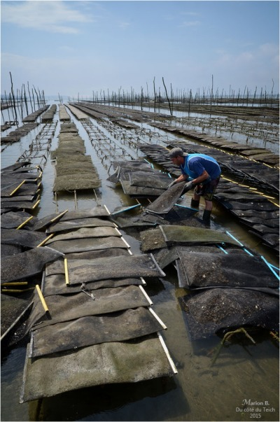 blog-dsc_35826-travail-parcs-à-huîtres.jpg