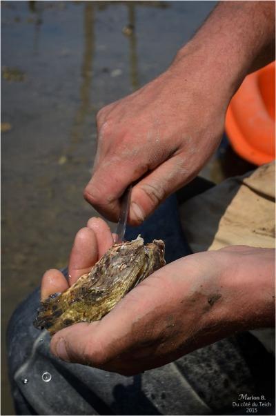 blog-dsc_35877-dégustation-huîtres-sur-parcs.jpg