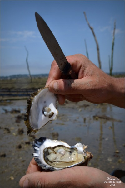 blog-dsc_35879-dégustation-huîtres-sur-parcs.jpg