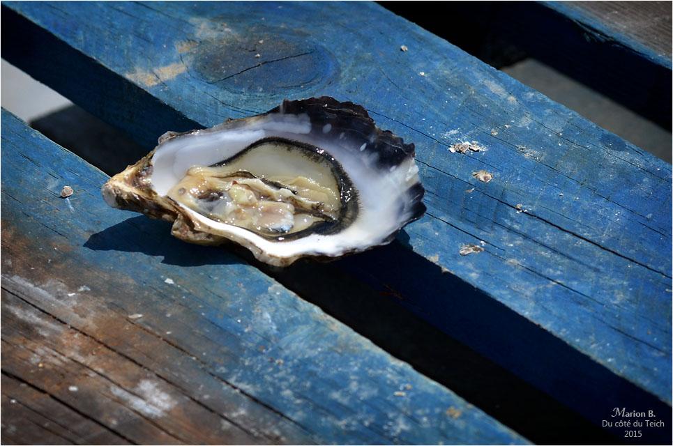 blog-dsc_35899-2-dégustation-huîtres-sur-parcs.jpg