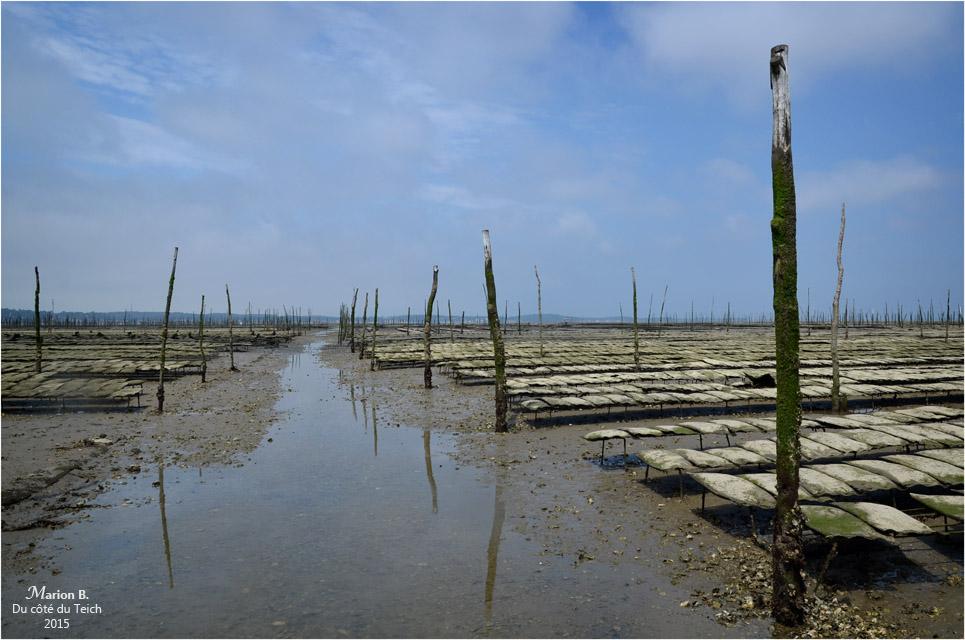 blog-dsc_35905-parcs-à-huîtres-attente-marcée-montante.jpg