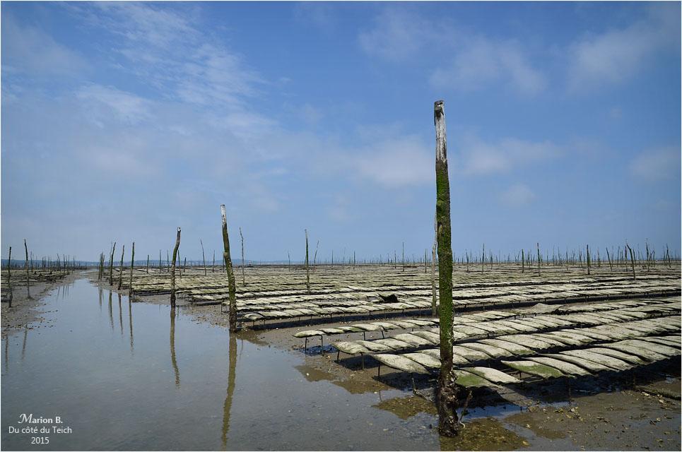 blog-dsc_35909-parcs-à-huîtres-attente-marcée-montante.jpg