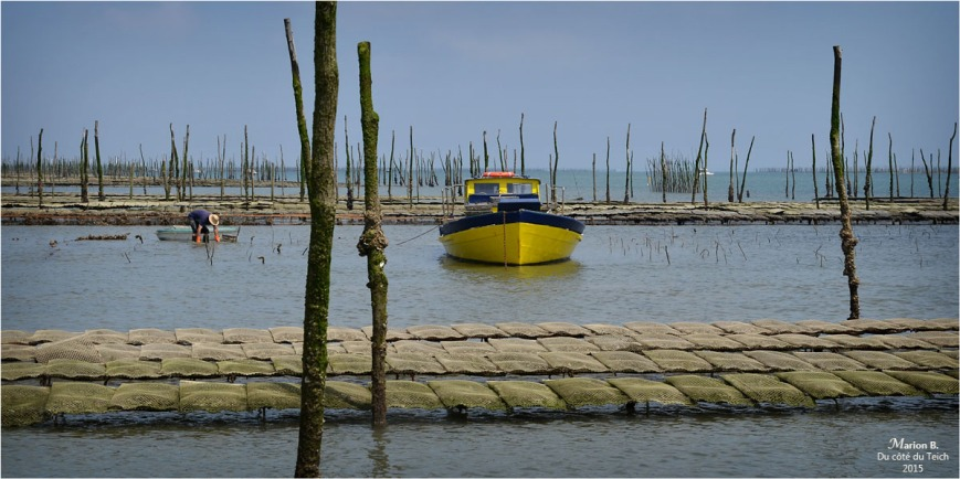 blog-dsc_35924-rec-travail-parcs-à-huîtres.jpg