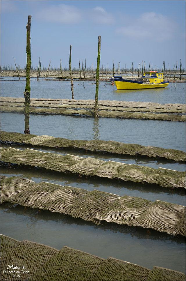 blog-dsc_35929-travail-parcs-à-huîtres.jpg