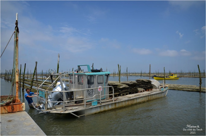 blog-dsc_35930-manoeuvres-parcs-à-huîtres.jpg