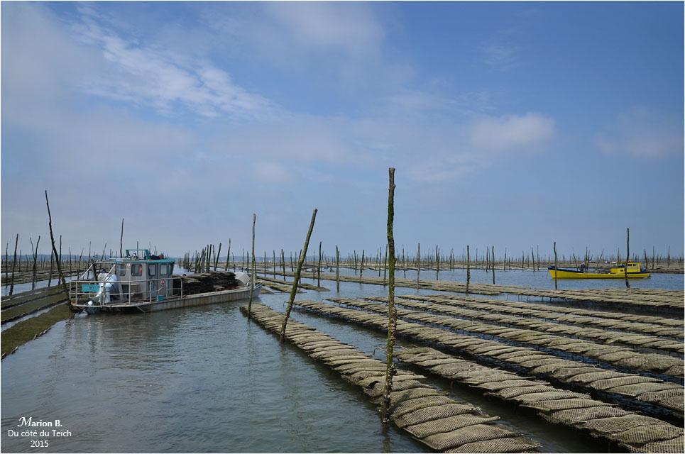 blog-dsc_35934-plate-et-chaland-parcs-à-huîtres.jpg