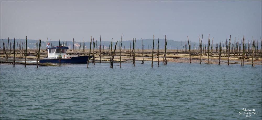 blog-dsc_35946-parcs-à-huîtres.jpg