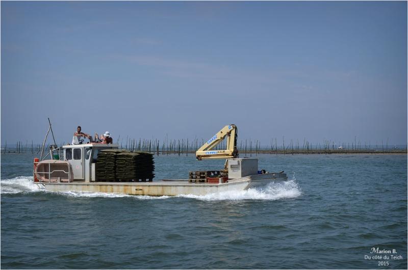 blog-dsc_35972-retour-parcs-à-huîtres
