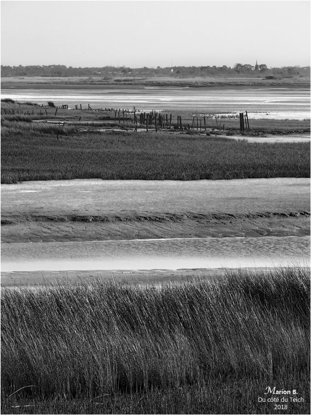 BLOG-P3211311-rivages Audenge N&B