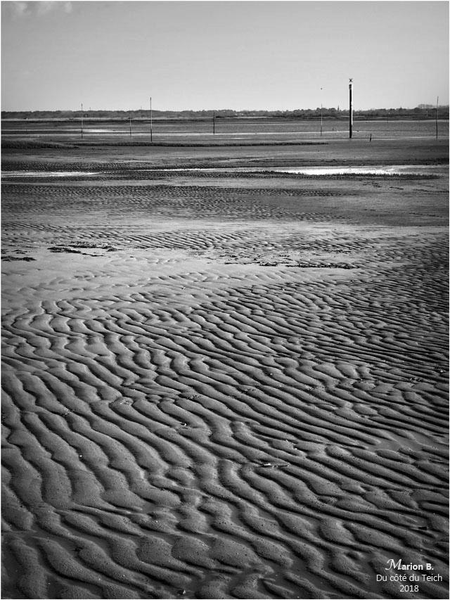 BLOG-P3211325-rivages Audenge marée basse N&B