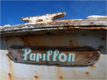 BLOG-P3221342-pinasse Papillon