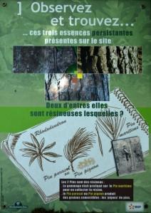 Observation forêt domaniale St Laurent Médoc 1