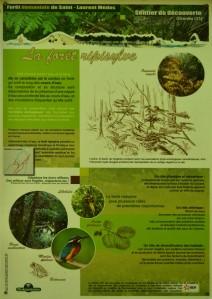 présentation forêt domaniale ripisylve St Laurent Médoc 3