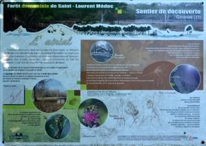 présentation forêt domaniale St Laurent Médoc 2