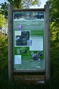 présentation massif forestier St Queyran 1