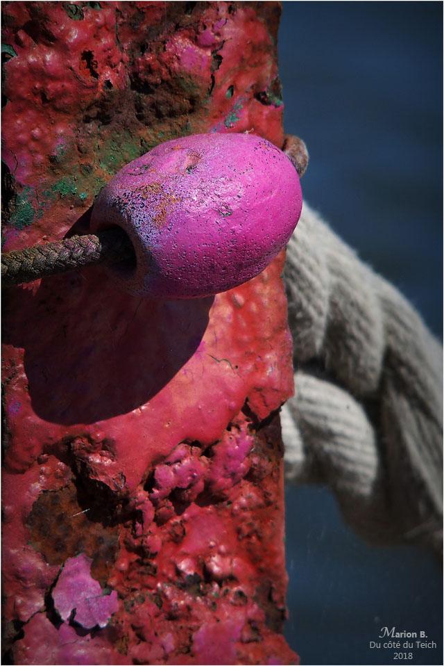 blog-p6252429-flotteur-rose-1.jpg