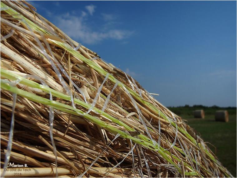 BLOG-P7092570-rouleaux de foin plaines du Teich