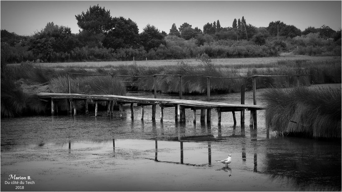 BLOG-P7293127-sentier littoral le Teich N&B
