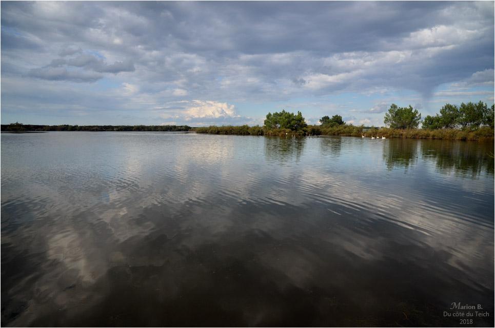 BLOG-DSC_45149-réserve ornitho le Teich