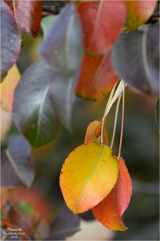 BLOG-DSC_45168-feuillages automne