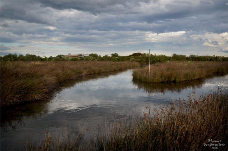 BLOG-DSC_45183-réserve ornitho le Teich