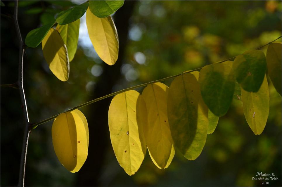 BLOG-DSC_45201-feuillage automne