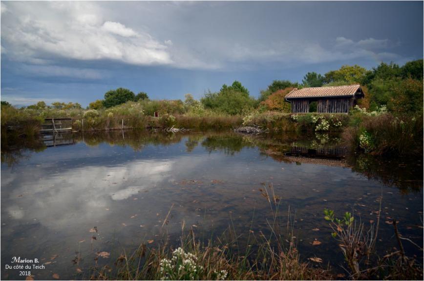BLOG-DSC_45207-réserve ornitho le Teich