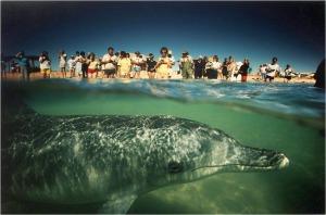 BLOG-PA183824-expo National Geographic sous les mers Musée Mer Marine Bordeaux