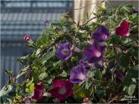 BLOG-PA183970-fleurs et verrière gare Bordeaux St-Jean