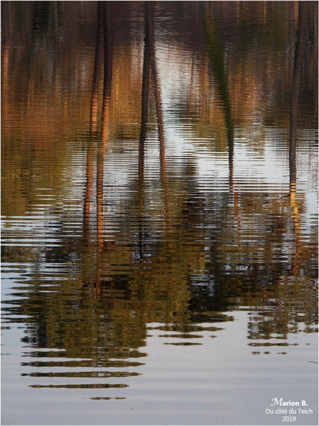 blog-p1040272-reflets pins étang