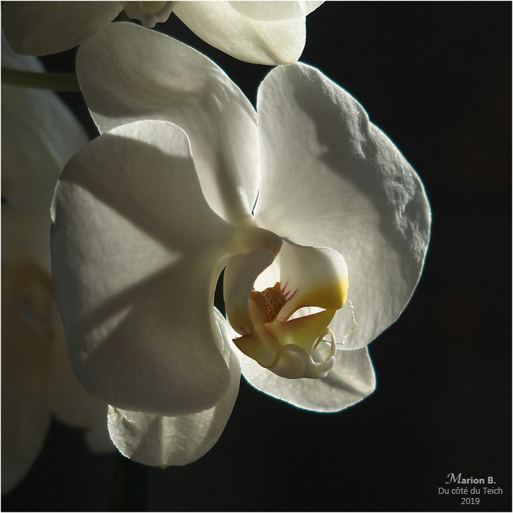 blog-p1050280-phalaénopsis
