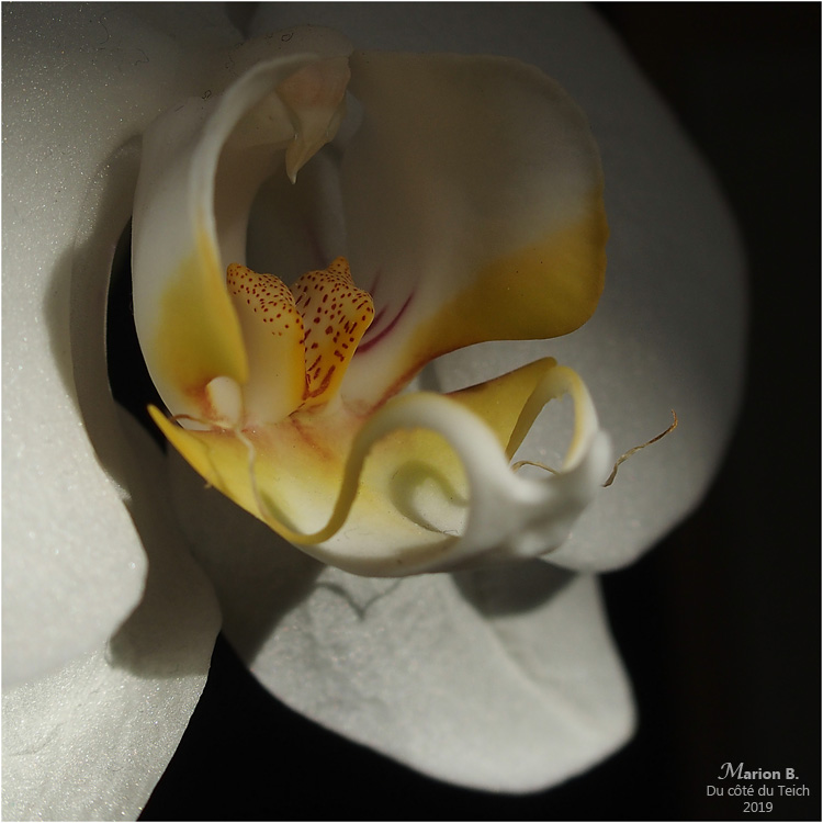 blog-p1050284-phalaénopsis