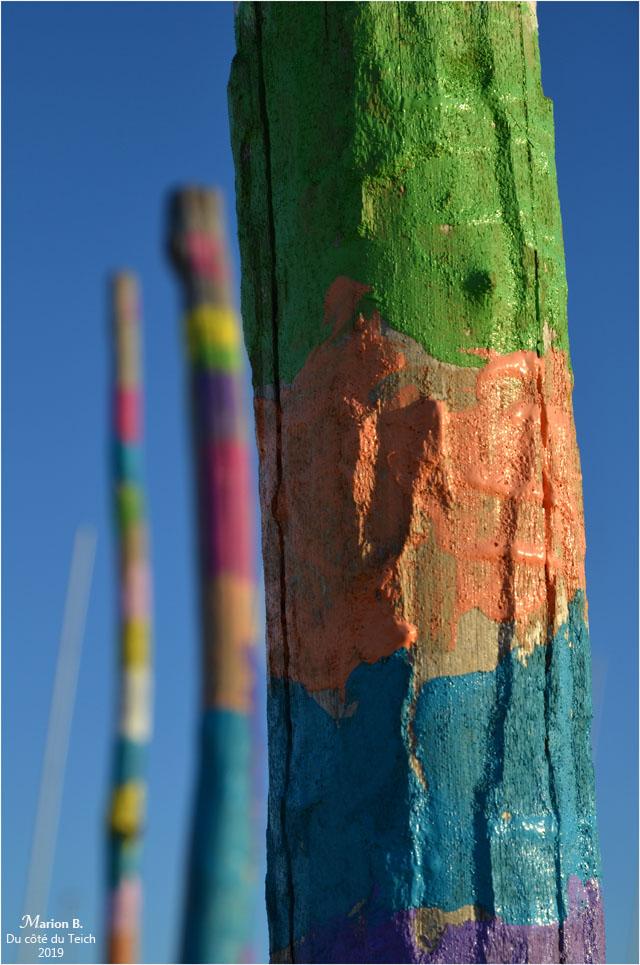 blog-dsc_45728-piquets-plage-la-salie-nord.jpg