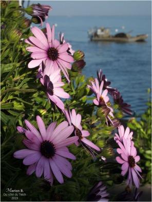 BLOG-P2210651-terrasse fleurie et plate ostréicole Piraillan
