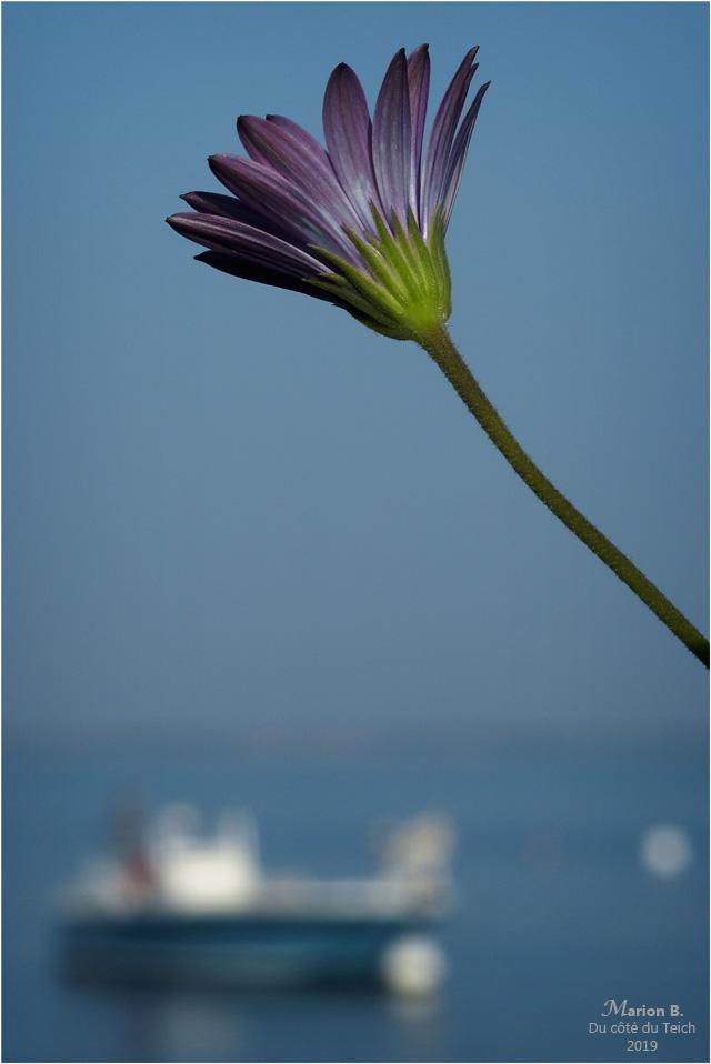 BLOG-P2210657-fleur et rivages Piraillan