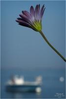 blog-p2210657-fleur-et-rivages-piraillan.jpg