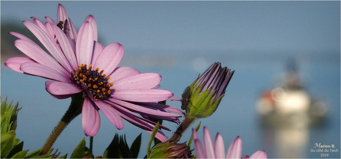 blog-p2210659-2-terrasse-fleurie-et-rivages-piraillan-550.jpg