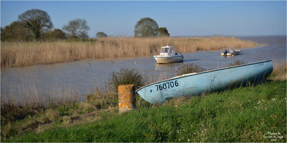 BLOG-DSC_46096-estuaire Gironde St Estèphe