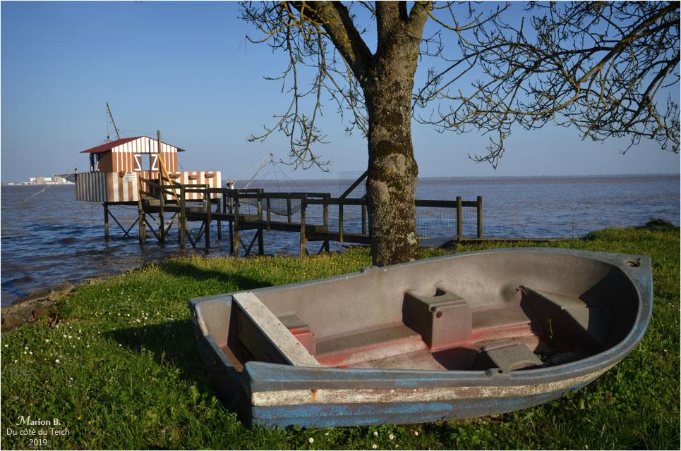 BLOG-DSC_46123-carrelet estuaire Gironde