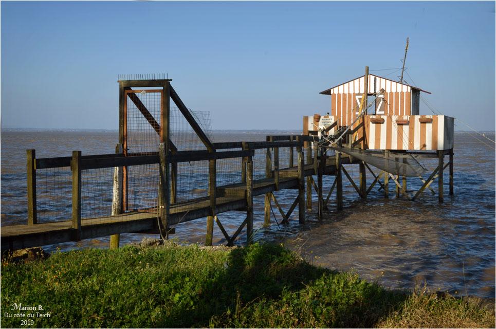 BLOG-DSC_46124-carrelet estuaire