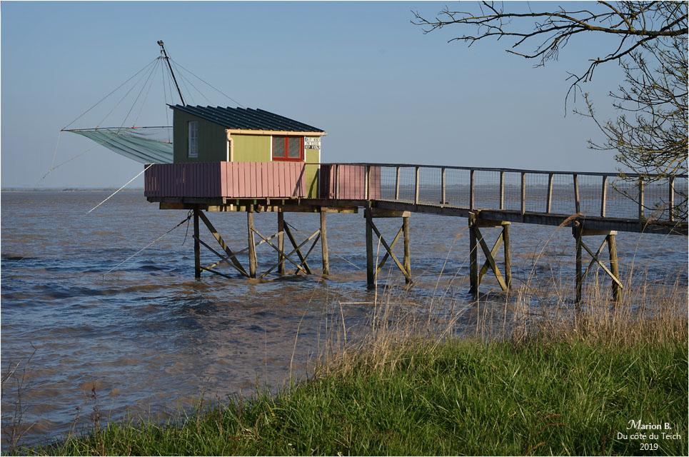 BLOG-DSC_46131-carrelet estuaire Gironde