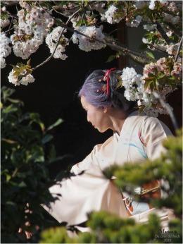 BLOG-P3300993-2-Hanami et Kimono