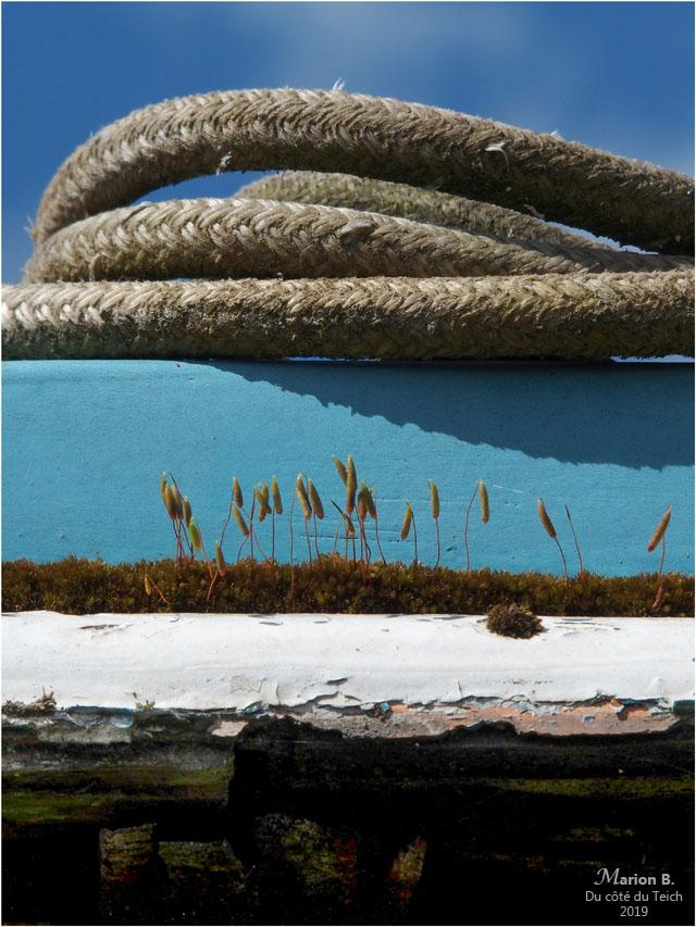 BLOG-P4071197-coque et cordages pinasse Tiburon